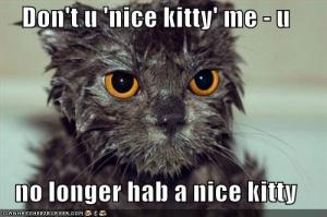 c7629_funny-pictures-wet-kitty-is-no-longer-nice1